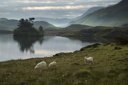 sheep-in-field-at-sunrise-landscape-with-mountains-and-lake-in-b-matthew-gibson